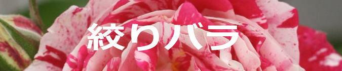バラ 品種 特徴